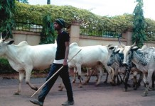 Ranching is the best way to avoid herdsmen/farmers conflicts